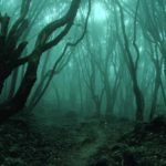 creepy forest 1