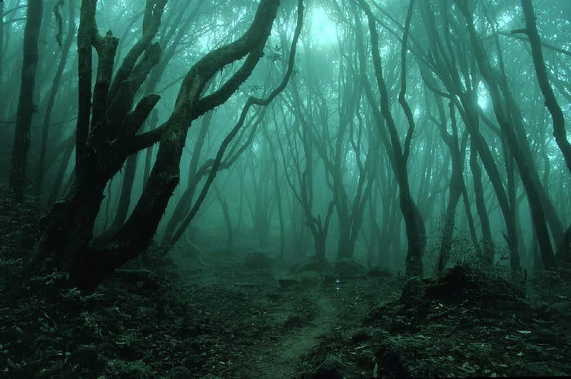 creepy-forest-1